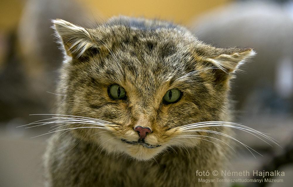 sites macska találkozó)